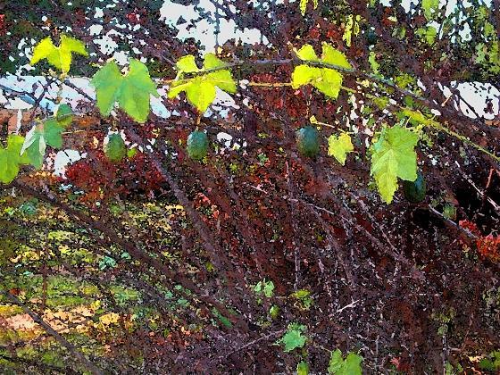 04-greenpods01.jpg